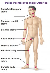 Pulse points over major arteries